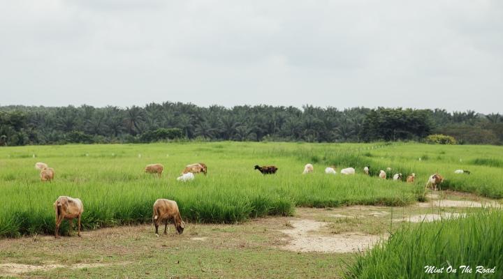 马来西亚也有休闲农场?