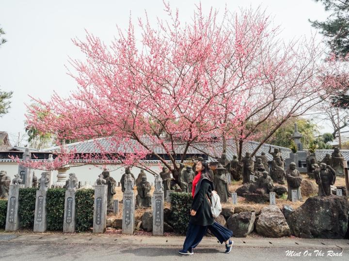 限时72小时|京都|DIY寿司体验